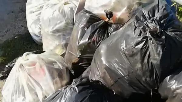 Gli 'angeli' del Garigliano in azione per ripulire foce e parco | VIDEO