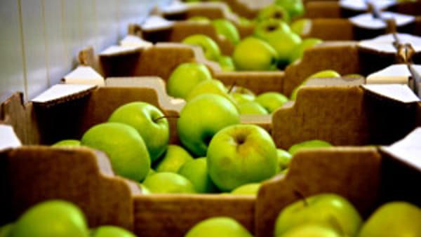 Nelle scuole di Caserta e provincia una merenda 'che frutta!'