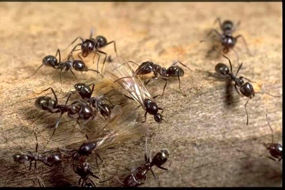I Consigli Per Evitare L Invasione Di Formiche