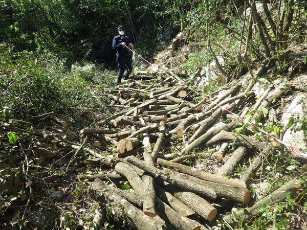 sequestro legna carabinieri forestale roccaromana-2